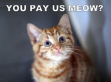 You pay us meow?